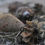 Дачница с Круглянаў попала на мину на собственном участке