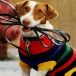 В Сенно появится площадка для выгула собак