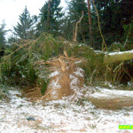 От балтийского шторма пострадал сенненский парк