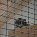 В луцком зоопарке построят новые вольеры