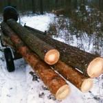 В Любешовском районе «на горячем»попались четверо воров леса