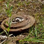 В лесу вблизи Ратного лесоводы нашли учебную мину