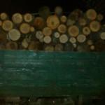 Группа лиц на Маневиччині организовала незаконный лесной бизнес