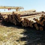 На Волыни под прикрытием управления лесного хозяйства области организовалась преступная группа с вырубки леса и отправки его за границу