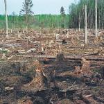 За подделку документов на вырубку леса будут судить двух работников Маневицкого лесхоза