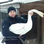 На Волыни патрульные спасли лебедя