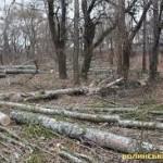 На Волыни задержали мужчину, который занимался незаконной вырубкой деревьев