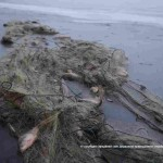 Пограничники задержали граждан, которые незаконно занимались рыбным промыслом