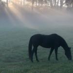 За кражу коня волынянину грозит до 3 лет за решеткой
