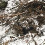 Вблизи границы с Польшей в лесу среди снега найдено тайника с сигаретами